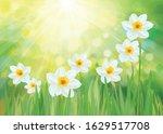 vector daffodil flowers. spring ... | Shutterstock .eps vector #1629517708