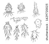 many different black roots.stem ... | Shutterstock .eps vector #1629720025