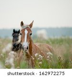 Stock photo horses in field 162972275