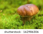 Small Brown Boletus Growing In...