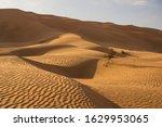 beautiful yellow sand dunes in... | Shutterstock . vector #1629953065