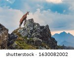 Scenic View Of Mountain Goat O...