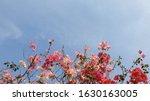 Beautiful Blooming Magenta...