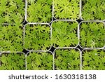 cactus beautiful plant summer... | Shutterstock . vector #1630318138