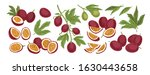 set of realistic ripe tropical... | Shutterstock .eps vector #1630443658