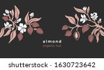 Almond template. Vector natural nut. Natural tree, botanical branch, fruit, leaf, flower in bloom. Art design, vinrage illustration. Organic nature milk, bio oil. Farm plantation