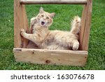 Stock photo cute kitty 163076678