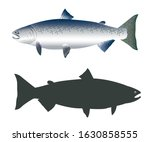 Chinook Salmon Fish, Chinook Silhouette