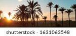 Horizontal Image Palm Trees...