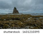 Tidepools Span Across Pacific Coast with Sea stack in distance