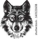 vector sketch of a wolf's face | Shutterstock .eps vector #163122638