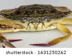 Front View Of Blue Manna Crab ...