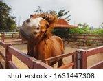 horse shakes his head on farm...