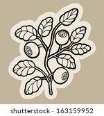 blueberry cartoon vector.   Shutterstock .eps vector #163159952