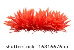 3d Rendering Of A Red Anemone...