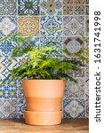 Houseplant In Terracotta...