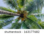 coconut tree against a yellow... | Shutterstock . vector #163177682