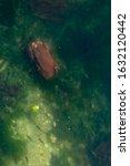Large Red Crab Sitting At...