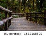 Bridge Walkway Thru The Forest