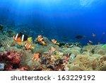 anemones  clownfish underwater... | Shutterstock . vector #163229192