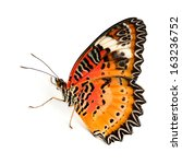 Stock photo leopard lacewing butterfly isolated on white background 163236752