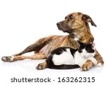 Stock photo large dog and cat lying together isolated on white background 163262315