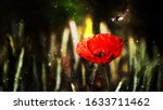 Close Up Of A Red Poppy And A...