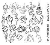 set of spring buds. flower... | Shutterstock .eps vector #1633839718