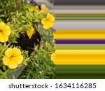 Beautiful Color Wallpapers Of...