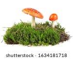 Fly Agaric Mushrooms On Green...