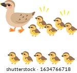 Cute Female Wild Duck And...