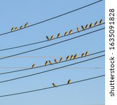Birds In Groups Like Musical...