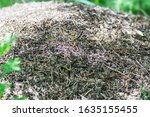 large ants crawl over a huge... | Shutterstock . vector #1635155455