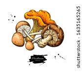 mushroom hand drawn vector... | Shutterstock .eps vector #1635165265