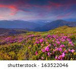 magic pink rhododendron flowers ... | Shutterstock . vector #163522046