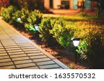 Night View Of Flowerbed...