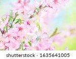 Spring Blossom Springtime...