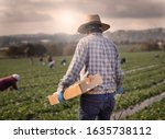 Small photo of Male field worker with straw hat at strawberry farm walking with box for picking with other workers in the distance in morning haze.