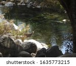 Small photo of A mule deer doe standing by the Kaweah River in the Sequoia National Forest, California.