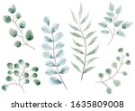 set of watercolor botanical... | Shutterstock .eps vector #1635809008