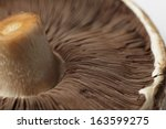 uncooked portobello mushroom ... | Shutterstock . vector #163599275