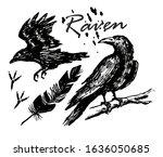 Ink Drawn Raven. A Raven...