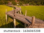 Bamboo Bridge Over Rice Paddie...