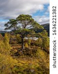 Small photo of Glen Affric's stunning landscape is the perfect combination of ancient Scots pinewoods, lochs, rivers and mountains It is perhaps the most beautiful glen in Scotland.