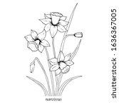 Sketch Floral Botany. Narcissus ...