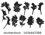 set of branches of wormwood ... | Shutterstock .eps vector #1636662388