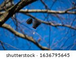 Tea cup hanging in a tree in Jeffersonville Indiana.