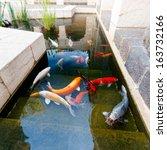Koi Pond With Japan Colorful...