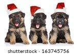 German Shepherd Puppies In Red...