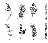 a big set of wildflowers  herbs ...   Shutterstock .eps vector #1637571958